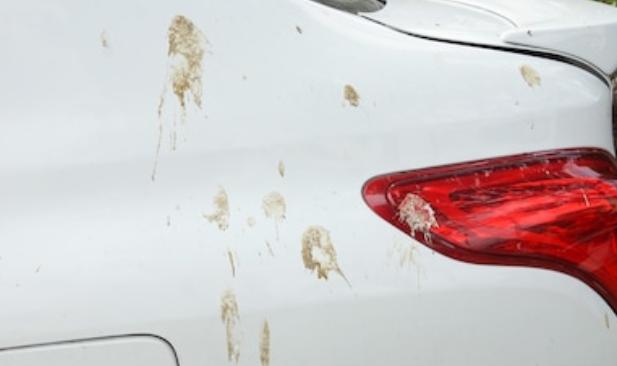 Gambar ini menunjukkan bodi belakang Mobil warna putih terdapat kotoran burung