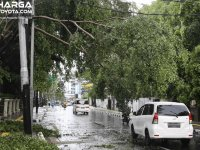 Utamakan Keselamatan, Begini Tips Menghindari Pohon Tumbang Saat Musim Hujan